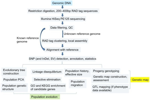Technology roadmap of RAD-Seq and its utility in population evolution and genetic map.Abbreviations: PE, paired end; QC, quality control; InDel, insertion and deletion; SV, splice variant; PCA, principal component analysis; QTL, quantitative trait loci.