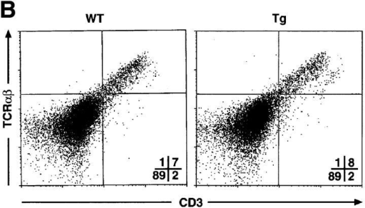 T cell development in mIκB-α transgenic mice. Single cell suspensions of thymocytes from mIκB-α transgenic (Tg) and wild-type (WT) mice  were stained with PE–α-CD4 and FITC–α-CD8 (A), or PE–α-TCR-α/β and FITC–α-CD3 (B) antibodies and analyzed by flow cytometry. Percentages of  cells in the individual subpopulations are shown in the lower right quadrant. (C) Splenocytes from mIκB-α transgenic (Tg) and wild-type (WT) mice were  stained with 7-amino actinomycin D, PE–α-CD4, and FITC–α-CD8, and were analyzed by flow cytometry. Total numbers (× 106 cells) of live CD4+ and  CD8+ splenic T cells were determined from at least three mice in each group. The data is shown as mean ± SD.