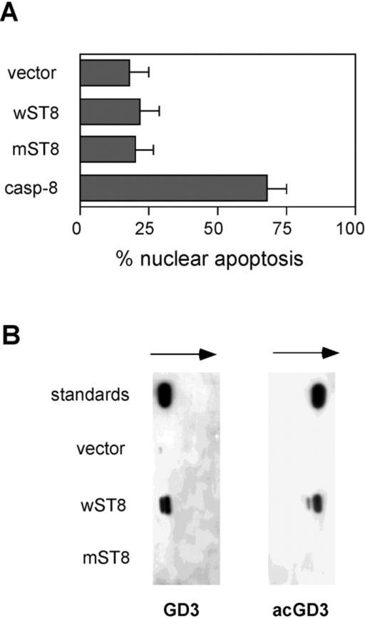 HEK-293 cells are resistant to endogenous GD3 accumulation and synthesize 9-O-acetyl GD3. (A) The percentage of apoptotic HEK-293 nuclei was analyzed 40 h after transfection with empty vector (vector), wild-type GD3 synthase (wST8), dead mutant GD3 synthase (mST8), and caspase-8 as a positive control. Data represent the mean ± 1 SD from five independent experiments. (B) GD3 and 9-O-acetyl GD3 content of HEK-293 cells was analyzed by TLC and immunostaining 40 h after transfection with the indicated constructs. Data are representative of six independent experiments.