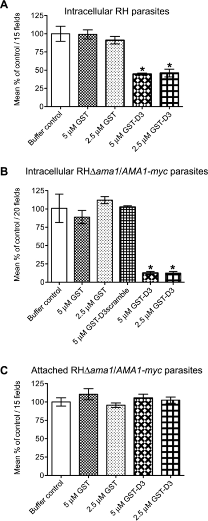 Pre-incubation of RH and RHΔama1/AMA1-myc parasites with GST-D3 decreases invasion efficiency.(A, B) Extracellular RH (A) or RHΔama1/AMA1-myc (B) parasites were pre-treated with a buffer control or indicated molar equivalents of GST alone, GST-D3, or GST-D3scramble (B only) and then permitted to infect HFF monolayers for 15 minutes using temperature-based synchronized invasion conditions. The number of intracellular parasites was determined by differential staining of the extracellular vs. total parasites before and after detergent permeabilization. The number of intracellular parasites was determined for 15 (A) or 20 (B) randomly-selected fields from three coverslips for each condition tested. The invasion levels for each condition are shown relative to the buffer-treated control (shown are means with standard deviation). An asterisk indicates a statistically significant reduction in invasion relative to the GST controls (unpaired Student's t-test), with p<0.0099 (A) or p<0.0002 (B). (C) To determine if GST-D3 treatment affects attachment, RHΔama1/AMA1-myc parasites were pre-treated with molar equivalents of GST alone, GST-D3, or a buffer control as described above and then permitted to attach to formaldehyde-fixed HFF monolayers. The number of stained, attached parasites was counted in 15 randomly-selected fields from three coverslips for each condition tested. The attachment levels for each condition are shown relative to the buffer-treated control (shown are means with standard deviation).