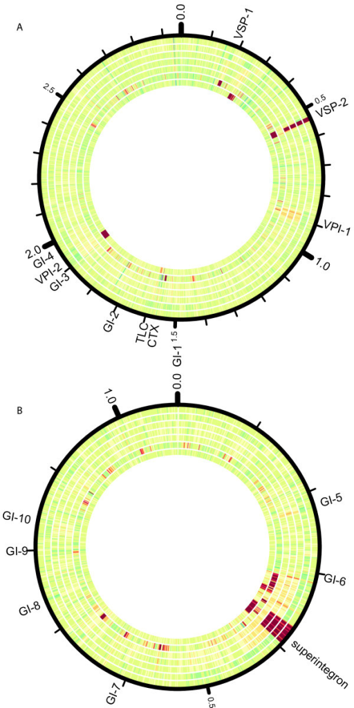 Variation in depth of coverage of the sequenced isolates, based on read alignments of the seven sequenced strains against the N16961 reference genome. Chromosome 1 (A) and chromosome 2 (B) are shown. The depth of coverage of 1000 base pair windows of 150x average coverage subsamples of the DR1 (outermost circle), H1*, H2*, H3, N16961*, O395*, and DB_2002 (innermost circle) isolates is displayed. Regions at low depth of coverage (<12x) are shown in red, while regions at high depth of coverage (>240x) are shown in blue. The depth of coverage in each window is displayed using the Circos tool [34]. Genomic islands as defined in [15] and the superintegron region as defined in [8] are shown.