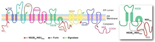 topology of the membrane bound Sequence similarity as a predictor of the transmembrane topology of membrane-intrinsic subunits of bacterial respiratory chain enzymes richard a rothery1,navita kalra1, raymond j turner2,andjoel h weiner1† 1cihr group in the molecular biology of membrane proteins, department of biochemistry, 474 medical.