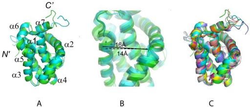 Superposition of selected Mcl-1 structures.(A) Structures of hMcl-1(171–327) (green) and mMcl-1(152–308) (cyan, PDB accession code 1wsx) after superposition of the backbone N, Cα and C' atoms of the α-helices for minimal rmsd. (B) Ribbon drawing (zoomed into (A)) showing the different binding groove widths of human (green) and mouse (cyan) protein. The distances between the Cα-atoms of residues His 224 in helix α2 (His 205 in mMcl-1) and His 252 (His 233 in mMcl-1) at the C-terminus of helix α3 are highlighted: ∼16 Å in hMcl-1(171–327) and ∼14 Å mMcl-1(152–308) (C) Superposition as in (A) of hMcl-1(171–327) (green) and mMcl-1(152–308) (cyan, 1wsx), and six selected Mcl-1 complex structures (see also Table 2): human Mcl-1 complexed with Bim BH3 (magenta, 2nla); chimeric rat-human rMcl-1(171–208)hMcl-1(209–327) complexed with mouse mNoxaB BH3 (yellow, 2rod); mouse mMcl-1(152–308) complexed with mouse NoxaA BH3 (pink, 2roc); mouse mMcl-1(152–308) complexed with mouse Puma BH3 (grey, 2jm6); mouse mMcl-1(152–308) complexed with mouse NoxaB BH3 (purple, 2rod); chimeric rat-human mMcl-1(171–208)hMcl-1(209–327) complexed with human Bim BH3 (orange, 2nl9); chimeric rat-human mMcl-1(171–208)hMcl-1(209–327) complexed with human Bim BH3(L62A, F68A) (light green, 3d7v).The figures were prepared with the programs MOLMOL [36] and PYMOL [37].