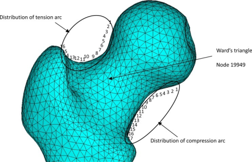 Stress location points around the femoral neck in the femur finite element model.
