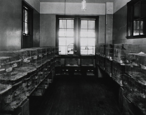 <p>Interior view of a room with parrot cages stacked along the walls.</p>
