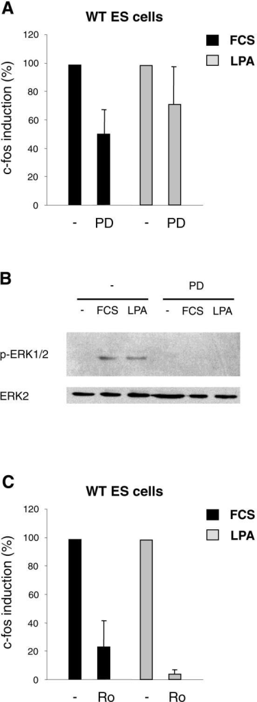 Induction of c-fos in WT ES cells. A – Cells were serum-starved for 36 h and incubated with 25 μM PD98059 during the last hour of starvation where indicated. Cells were stimulated with 15% FCS or 20 μM LPA for 30 min, followed by quantitative RT-PCR. Based on relative mRNA levels, fold inductions of c-fos were calculated from three independent experiments (FCS: 82.1 ± 27.6, FCS + PD: 43.8 ± 25.7, LPA: 63.1 ± 43.5, LPA + PD: 39.7 ± 25.2). To eliminate experiment-to-experiment variations in the induction levels and to more clearly show the effect of PD98059, induction without inhibitor was set to 100% for each individual experiment and percent c-fos induction was calculated for the samples treated with inhibitor. B – Cells were serum-starved and treated as in A. Stimulation was done for 10 min and ERK1/ERK2 phosphorylation was analysed as in Figure 1. C – Cells were serum-starved and treated as in A, except that PD98059 was replaced by 5 μM Ro318220. Fold inductions from three independent experiments were FCS: 76.2 ± 42.0, FCS + Ro: 15.7 ± 10.5, LPA: 67.9 ± 20.3, LPA + Ro: 2.8 ± 1.9. Representation of the data as in A.