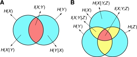 venn diagrams indicating the mutual information common to multiple variables a mutual information