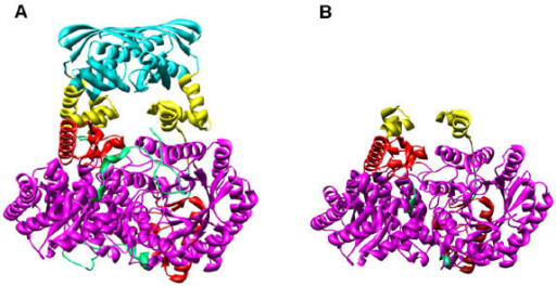 MOLSCRIPT model of MtαIPMS (Panel A) and the TIM barrel domain (Panel B). The TIM barrel domain (magenta), sub-domain I (yellow), sub-domain II (red) and regulatory domain (cyan). The model has been generated using program UCSF Chimera.