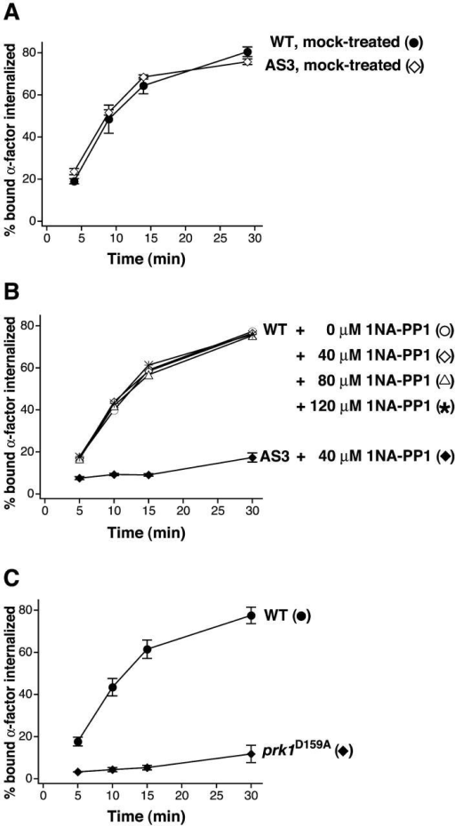 Defective receptor-mediated endocytosis upon inhibition of Prk1p activity. Internalization of 35S-labeled α-factor was measured. In A and B, the time course of internalization was started after 30 min incubation with 1NA-PP1 or mock treatment. (A) ark1Δ PRK1 (WT) and ark1Δ prk1-as3 (AS3) cells without 1NA-PP1. (B) ark1Δ PRK1 (WT) and ark1Δ prk1-as3 (AS3) cells treated with 1NA-PP1. (C) ark1Δ PRK1(WT) and ark1Δ prk1D159A cells. Error bars represent the SD from at least three experiments. The experiment with ark1Δ PRK1 in B was performed twice. Strains: ark1Δ PRK1, DDY2607; ark1Δ prk1-as3, DDY2608; ark1Δ prk1D159A, DDY2609.