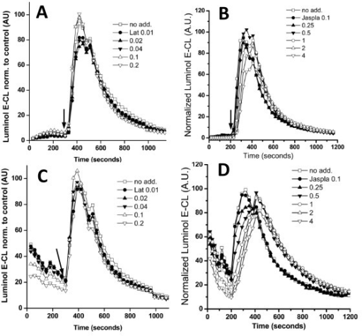Over-expression of p47phox alleviates the effects of latrunculin and jasplakinolide. Superoxide production of Ra2 cells over-expressing p47phox wild type (A,B) or the p47phox (S303D/S304D/S328D) mutant (C,D) and treated with increasing doses of latrunculin (A,C) or jasplakinolide (B,D) before stimulation with PMA. The ordinate in arbitrary units shows luminol E-CL signal normalized to cells receiving no toxin (no add.), and results are presented as mean of at least three independent experiments. Arrows indicate time point of agonist injection.