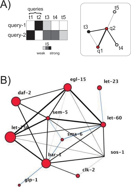 Genetic interaction networks.A) Genetic interactions of different strengths between query and target genes constitutes the genetic network (red nodes represent query genes (); white/black nodes represent target genes interacting with one () or more than one () query. B) The C. elegans query network –constituted by the interactions between query genes only– represents the functional associations between different signaling pathways. IS is represented by the width of the edges, while the number of interactions with target genes other than queries (target-connectivity) is qualitatively described by node size. Those interactions of relatively weak strength that appeared most important to maintain the structure of functional linkages among pathways (network as a single-connected component, see main text) are highlighted in blue.