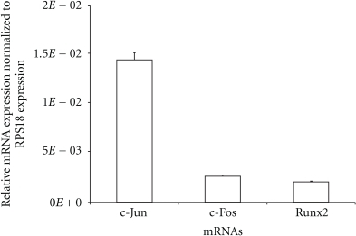 Relative mRNA expression of the Runx2 and AP-1 transcription factors based on real-time RT-PCR. The expression of c-Jun, c-Fos, and Runx2 in GCT stromal cells treated with cytokines IL-1β for 24 h in serum-free media was analyzed using real-time PCR. The ΔΔCT method was used to calculate the real-time RT-PCR fold change using RPS18 mRNA for normalization, and all changes in expression are relative to the control without any treatment. Triplicate independent real-time PCR were performed.