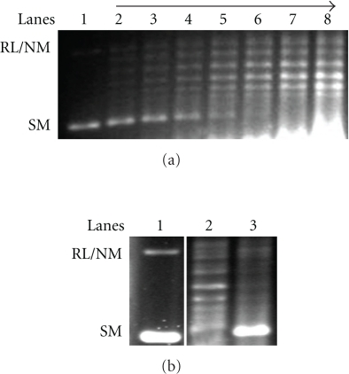 DNA relaxation assay by recombinant LdTopIIIβ. (a) Negatively super coiled DNA was incubated with 1, 2, 3, 4, 5, 7 and 10 μL of recombinant LdTopIIIβ containing lysate for 30 min (lanes 2–8). Lane 1 is the DNA control. (b) DNA relaxation assay carried out with recombinant LdTopIIIβ (lane 2), and empty vector containing lysate (lane 3). Lane 1 is the DNA control.
