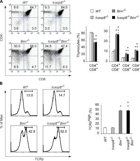 Additional loss of caspase-8 does not rescue impaired intrathymic T cell development in Bim-deficient mice. (A) Representative flow cytometric analysis of thymocytes from tcasp8−/−Bim−/− and control (WT, tcasp8−/−, and Bim−/−) mice (left). Numbers in the quadrants indicate the percentages of the different thymocyte subpopulations. Histograms show the mean percentages of thymocyte subpopulations from 10 young mice of each genotype (right). (B) Representative expression levels of TCR-β on thymocytes of the mice indicated in A are shown (left). Histograms show the mean percentages of thymocytes with high TCR-β expression levels from 10 young mice for each genotype (right). Data represent the mean ± SEM (error bars). *, P < 0.05 as compared with WT; •, P < 0.05 as compared with the tcasp8−/−.
