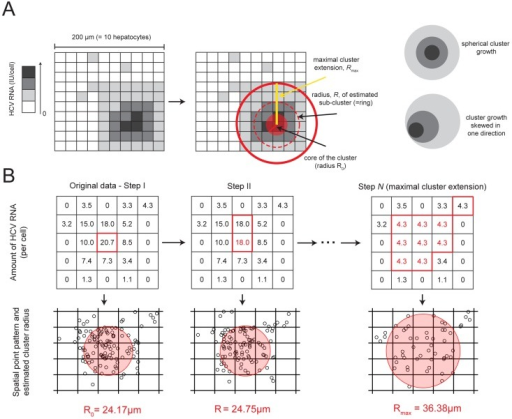 "Sketch of the characterization of clusters of infected cells.(A) Example of measured data in a  grid of cells with the HCV RNA content per cell (left) and sketch of the ring structure of the cluster (right) as it would be defined by the algorithm shown in (B). Darker shading of cells indicates a higher amount of HCV RNA. The fitting procedure of the Matérn cluster process to estimate the domain radius  accounts for edge effects due to sampling, i.e., only parts of the cluster might be visible on the grid of liver tissue analyzed by scLCM. The sketch in (A) shows an example for a cluster that grew spherically. The algorithm also allows for cluster growth that is skewed in one direction. (B) Example of the algorithm to determine the ""ring structure"" of a cluster of infected cells for a  grid of cells. The measurements of HCV RNA per cell are transformed into a spatial point pattern (see Materials & Methods). The amount of HCV RNA in those cells with the maximal HCV RNA content is subsequently reduced to the next lower level (red color) (Step I–Step II). For each of the different steps,  spatial point patterns are produced, and a Matérn cluster process is fitted to each pattern to estimate . Step  shows the last step before the cutoff criterion for the maximal cluster extension. For all subsequent steps of this example Pearson's chi-squared statistic for the point patterns indicated spatial heterogeneity for less than 95% of the  bootstrap samples."
