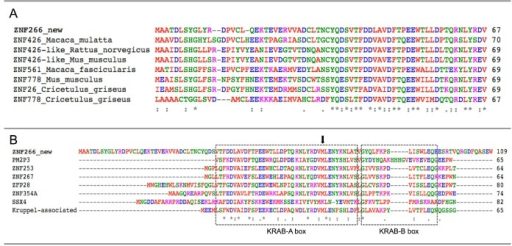 "Multiple alignment of the N-terminal residues of the novel predicted ZNF266 variants. The evolutionary conservation of the new 67 amino acids is shown in (A); Krüppel-associated box (KRAB)-A and -B boxes (dashed lines) alignment with other human genes is shown in (B). Identical residues are indicated by ""*"", conservation between groups of strongly and weakly similar properties by "":"" and ""."" respectively. Black arrow indicates the start of the canonical ZNF266 protein isoform."