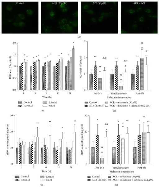 Effects of MT on ROS and MDA generations induced by ACR in PC12 cells. Intracellular ROS was evaluated by DCFH-DA detection. Fluorescent photographs were shown after exposure to ACR with or without MT cotreatment for 24 h (scale bar: 25 μm) (a). In addition, ROS (b) and MDA (d) productions induced by treatment with ACR (1.25, 2.5, and 5 mM) alone for 1, 3, 6, 12, and 24 h. Moreover, MT (50 μM) and luzindole (0.2 μM) interventions at different times: 24 h pretreatment, simultaneously, and 3 h posttreatment with ACR (2.5 mM) for 6 h were designed ((c) and (e)). The results are expressed as the mean ± SD (n = 8). ∗P < 0.05, ∗∗P < 0.01 versus the vehicle control group. #P < 0.05, ##P < 0.01 versus the ACR treatment group, &P < 0.05, &&P < 0.01 versus the ACR + MT cotreatment group.