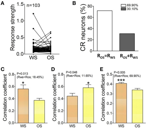 The activity level and cross-correlation of barrel cortical CR neurons in response to OS and WS. (A) Activity levels from CR neurons in response to WS and OS are different (n = 103 neurons). (B) Shows the percentages of CR neurons with equal strength (RWS = ROS, white bar, 69.9%) vs. distinct strength (RWS≠ ROS, gray, 30.1%). (C) Illustrates correlation coefficients for 18.45% CR neurons with RWS > ROS in response to WS (orange bar) and OS (yellow; p = 0.013; paired t-test). (D) Shows correlation coefficients for 11.65% CR neurons with RWS < ROS in response to WS (orange bar) and OS (yellow, p = 0.04; paired t-test). (E) Shows correlation coefficients for 69.9% CR neurons with RWS = ROS in response to WS (orange bar) and OS (yellow, p = 0.005; paired t-test). The recognition of barrel cortical neurons to WS and OS by encoding their different activity synchronies. *p < 0.05; ***p < 0.001.