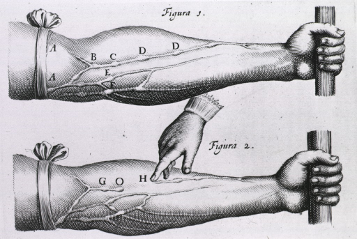 <p>Two arms with tourniquets just above the elbow; blood vessels are pronounced to indicate circulation.</p>