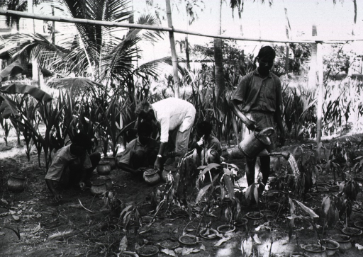 <p>Exterior view at an agricultural and rural center for the rehabilitation of young people: a few young men are being taught farming techniques; they are shown filling pots with soil and watering potted plants.</p>