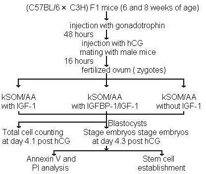 The scheme of conducted experiments