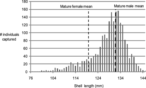 Size frequency distribution for Nautilus pompilius at Osprey Reef.Size frequency records for 2067 individuals range from 76 to 145 mm with a mean of 128.6±28.01 mm. Mature male and female mean shell lengths are shown.