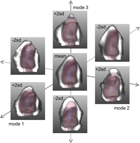 Modes of variations of an appearance model, created by varying the model descriptors one at a time. The appearance model consists of a 'shape' (spatial coordinates) and a 'texture' (image intensity values) component. The average and the three most principal modes (±2 standard deviations) are shown