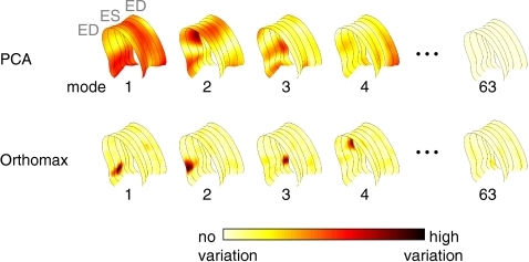 Modes of variation as calculated by Principal Component Analysis (PCA), which depict global variations in endocardial border motion, versus the local modes of variation after Orthomax rotation. The amount of the variation is colour-coded. The local modes are more concise and suitable for automatic classification of wall motion abnormalities