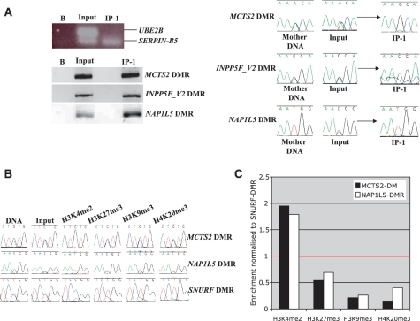 (A) Methylation-immunoprecipitation was performed on placental DNA using anti 5mC antibody. The efficiency of IP was assessed by PCR specific for the methylated SERPIN-B5 promoter and the unmethylated UBE2B promoter. The precipitations were subsequent used to assess the methylation at the human MCTS2, INPP5F_V2 and NAP1L5 DMRs. (B) Using the same PCR primer combinations, allelic-ChIP was performed on human placental cell lines (for clarity, only ChIP-bound fractions are shown). (C) qPCR on ChIP-bound material from the TCL1 cell immunoprecipitations. Levels of precipitation are compared to the SNURF DMR (red line, equal to one).