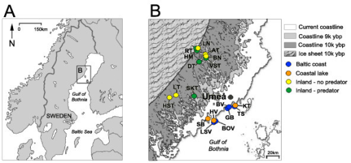 Study sites in northern Sweden. A) Location of the study area B) Enlargement of study area and study sites. Current and past coastlines (in calibrated years before present) are shown.