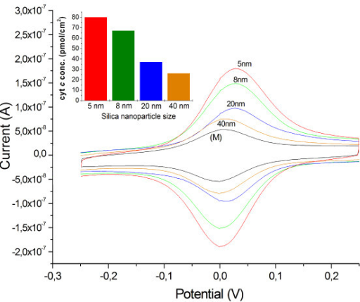 CV - Multilayer with different-sized SiNPs. Cyclic voltammetry of 4-bilayer-assemblies of cyt c/SiNPs: Ø = 5 nm, 8 nm, 20 nm, 40 nm and a cyt c monolayer (M) for evaluation of the influence of the SiNPs particle size (scan rate 100 mV/s, KPP7). Inset: Bar plot of the cyt c concentrations of 4-bilayer-assemblies (cyt c/SiNPs) with different-sized SiNPs.