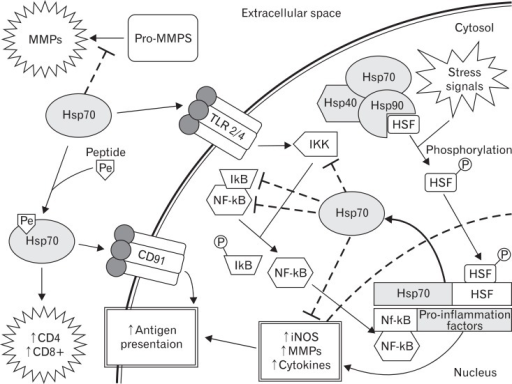 The mechanism of heat shock protein (Hsp70) modulation