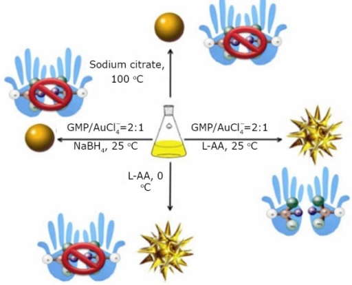 Schematic of different reaction conditions used to control the morphology and chirality of gold nanocrystals. Reprinted with permission from [41], Huang P, Pandoli O, Wang X, et al. Chiral guanosine 5'-monophosphate-capped gold nanoflowers: Controllable synthesis, characterization, surface-enhanced Raman scattering activity, cellular imaging and photothermal therapy. Nano Res 2012: 5: 630-639.