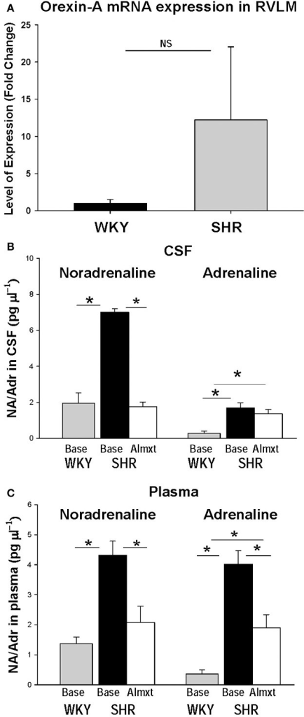 In the RVLM of SHR, OX-A mRNA expression is increased as is noradrenaline in CSF and plasma. There is clear trend toward an increase OX-A mRNA expression in RVLM in SHR relative to normotensive WKY rats (A). Antagonism OXRs with Almxt significantly decreased the elevated levels of noradrenaline (NA) in CSF (B), and both NA and adrenaline (Adr) in plasma in SHRs (B,C). (Figure adapted with permission from Li et al., 2013a). *Significantly difference (P < 0.002, One-Way ANOVA with Student–Newman–Keuls tests).