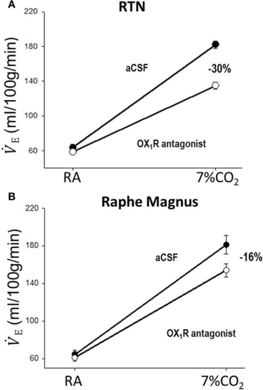 Focal application of an OX1R antagonist in the RTN and the medullary raphe magnus decreases the CO2 chemoreflex. Inhibition of OX1R in the region of RTN (unilateral, A) or raphe magnus (B) by an OX1R antagonist (SB334867) significantly decreased the CO2 chemoreflex by 30 or 16% respectively in wakefulness. (Figure adapted with permission from Dias et al., 2009 and Dias et al., 2010).