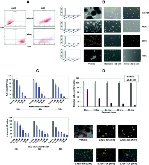 Effects of PKCδ inhibitors on human tumor cell spheroid formation. (A) Hs578T and MCF7 were plated under adherent or non-adherent conditions. Tumor spheroids and adherent cells were collected at 96 hr, stained for CD24 and CD44, and analyzed by flow cytometry. (B) Hs578T, MCF7, breast cancer stem cells (BCSC) and pancreatic cancer stem cells (PCSC) were plated in tumor spheroid media, in the presence of rottlerin, BJE6-106, or DMSO (Control). Tumor spheroids were enumerated at 96 hr, and normalized to the number of spheroids in the control cultures (assigned an arbitrary value of 100%). p values for comparison between vehicle and rottlerin or BJE6-106 effects were significant (p≤0.001). Photographs are of representative areas of the culture plates. (C) MCF7 cells were exposed BJE6-106 or to rottlerin at the indicated concentrations. The corresponding equivalent volume of solvent (DMSO) was used as a vehicle control (Vehicle). After 24, 48 and 72 hr of exposure, cell mass was evaluated by MTT assay. Control values were normalized to 100%. p values for comparison between vehicle and rottlerin effects on cell number at 24 hr reached significance at 5 μM, and for BJE6-106 at 0.5 μM (p ≤ 0.02), and were significant for all concentrations tested at 48 and 72 hr time points. (D) Hs578T cells were exposed to vehicle or BJE6-106 (1 μM) for 6, 12, 24, 48 or 96 hr. Viable cells were enumerated and re-plated in media without BJE6-206, and spheroid numbers were quantitated 96 hr later. p values for comparison between vehicle and BJE6-106 effects on spheroid number were significant after 6 hr of exposure (p≤0.02), and remained significant at all time points thereafter. Error bars represent SEM.