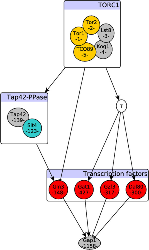 "TORC1-dependent regulation of Gap1. The schematic diagram is based on literature evidence for the known interactions. Each node in the signaling pathway is annotated with the rank of its information flow score from TORC1 and colored with its functional classification. Yellow nodes represent kinase associated proteins, red nodes are transcription factors, and blue node (Sit4) is a phosphatase. The rest of nodes have a default color of grey. Ranking of nodes based on their information flow scores coincides with our prior knowledge on the structure of this pathway. Top/bottom ranked nodes are discriminated using the computed cutoff value (l) based on differentially expressed genes. The ""?"" indicates an unknown underlying mechanism, yet to be discovered, that connects TORC1 to the rest of transcription factors."