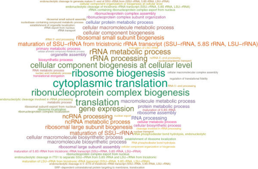 Enrichment analysis of the ERN. Static word cloud for the enriched BP terms in the effective response network (ERN).