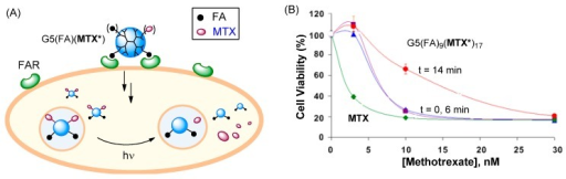(A) Proposed schematic illustrating the concept of light-triggered MTX release; (B) In vitro cytotoxicity of G5(FA)9(MTX*)17 in FAR(+) KB cells, before (control; t = 0) and after UV irradiation (t = 6 or 14 min) [84]. MTX* = MTX linked with a photocleavable linker.