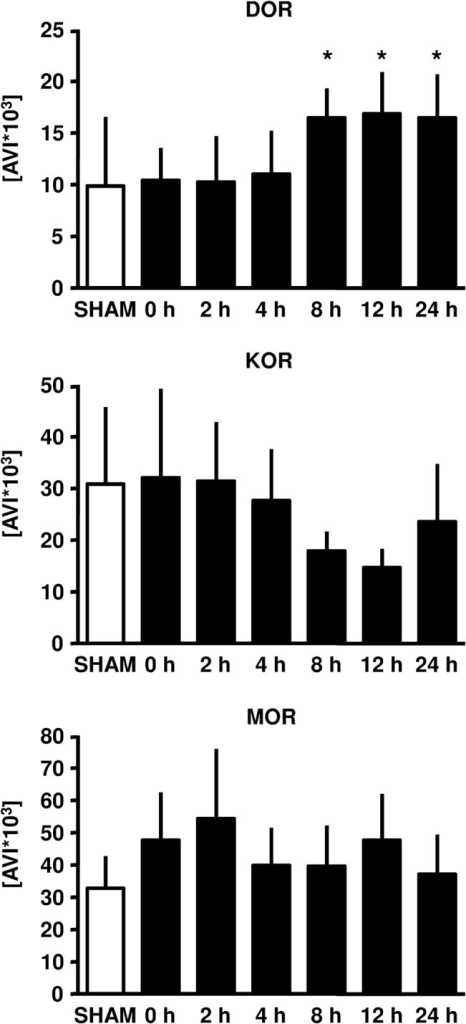 DOR, KOR and MOR expression in rat myocardium upon ischemic late preconditioning (LPC).Representative western blot analysis experiments of a time course (Sham, 0, 2, 4, 8, 12 and 24 hours after the ischemic stimulus was initiated). Summarized data presenting AVI (arbitray units of average light intensity) are shown. Data are presented as mean±SD, *P<0.05 vs. 0 hours.
