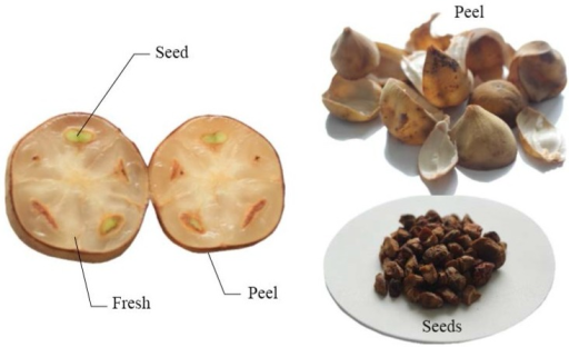 Illustration of fresh fruit, peel, and seeds of long-kong.