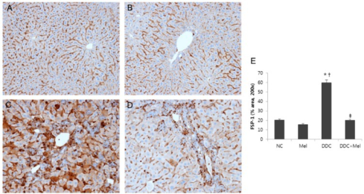 Melittin inhibits fibrotic changes in DDC-fed mice. Immunohistochemical staining findings demonstrated that melittin effectively suppresses the expression of FSP-1. Representative immunohistochemical images from each study group (five mice per group) (A) NC, normal control group; (B) Mel, melittin (0.1 mg/kg)-treated group with normal diet; (C) DDC, 0.1% DDC-supplemented diet group; (D) DDC + Mel, melittin (0.1 mg/kg)-treated group with 0.1% DDC-supplemented diet; magnification × 200; (E) morphometric assessment of the trichrome staining positive areas. Results are expressed as the mean ± SE of three independent determinations. *p < 0.05 compared to the NC group. †p < 0.05 compared to the Mel group. ‡p < 0.05 compared to the DDC group.