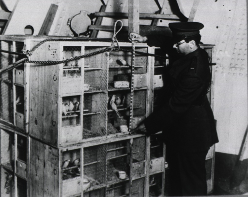 <p>Customs officer using a tape rule to measure parrot cages.</p>