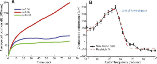 Effect of Adaptation Time on Chemotactic EfficiencyChemotaxis was simulated by assuming that the signaling pathway was approximated by the system of Figure 2B.(A) Different choices of k, and hence different adaptation times, result in varying chemotaxis efficiency. For example, cells with cutoff frequencies of k = 0.04 rad/s and k = 14 rad/s moved approximately 90 μm and 70 μm along the chemoattractant gradient. In contrast, a cell with a cutoff frequency of 3.4 rad/s moved approximately 250 μm along the gradient.(B) These simulations were repeated for a large range of cutoff frequencies. The resulting frequency-dependent chemotactic performance was fitted with a Rayleigh function to estimate the optimal cutoff frequency for chemotaxis (red dashed line). Chemotactic performance was based on the final position along the gradient after 80 s. Each point represents the average of 500 simulation runs, and vertical bars indicate mean plus or minus standard error of the mean. Rotational and translational diffusion coefficients of 0.16 rad2/s and 2.2 × 10−1 μm2/s, respectively, were used. Nominal parameters used: u = 20 μm/s, RT = 2.5 μM, Kd = k−/k+ = 100 μM, L0 = 0.01 μM, and g = 0.2 μM/ μm.