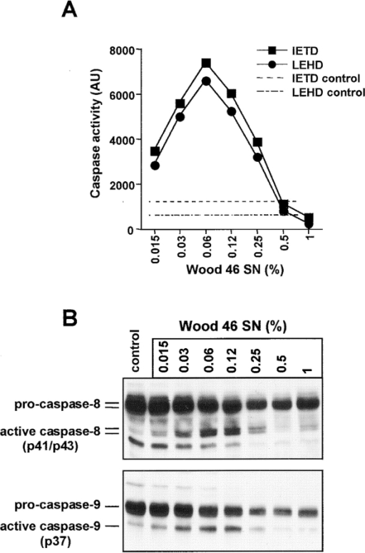 S. aureus induces activation of the initiator caspases 8 and 9. (A) Jurkat cells were incubated with the indicated dilutions of Wood 46 supernatant (SN). After 4 h, cell extracts were prepared and analyzed for caspase activity using the fluorogenic substrates IETD AMC for caspase 8 (▪) and LEHD AMC for caspase 9 (•). The two dashed lines represent IETDase and LEHDase activity in untreated cells. (B) Western blot analysis of the status of caspase-8 (top) and caspase-9 (bottom) in Jurkat cells that were either left untreated (control) or incubated for 4 h with the indicated dilutions of Wood 46 supernatant (SN). The uncleaved proforms and the p43/p41 fragments of caspase-8 and the p37 fragment of caspase-9 are indicated.