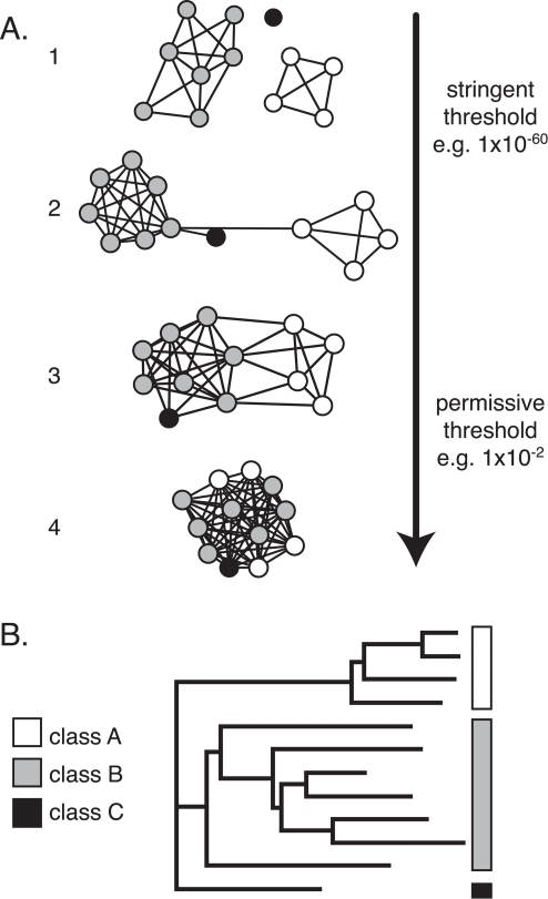Sequence similarity network topology changes in a predictable way with the stringency of the threshold.A. Thresholded sequence similarity networks represent sequences as nodes (circles) and all pairwise sequence relationships (alignments) better than a threshold as edges (lines). The same network, depicting three simulated protein classes, is shown here at four different thresholds. At stringent thresholds, the sequences break up into disconnected groups; within each group the sequences are highly similar. The relative positioning of disconnected groups has no meaning, while the lengths of connecting edges tend to correlate with the relative dissimilarities of each pair of sequences. As the threshold is relaxed and edges associated with less significant relationships are added to the network, groups merge together and eventually become completely interconnected. B. Simulated dendrogram for a sequence set that might give rise to the network in A.