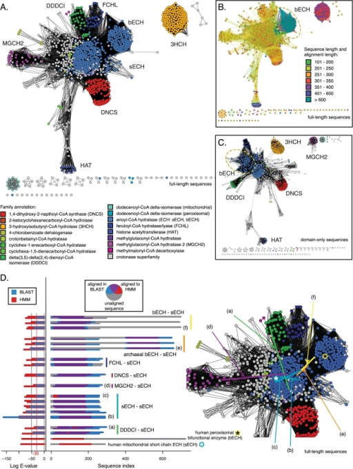 Crotonase superfamily: sequence similarity network from full-length sequences and from just the domain in common.The displayed networks all describe the pairwise relationships between 1,170 sequences from the crotonase superfamily. A. Network colored by family annotation, involving full-length sequences, thresholded at an E-value of 1×10−30. The worst edges displayed correspond to a median of 33% identity over alignments of 250 residues. B. The full-length network from A with nodes colored by sequence length and edges colored by alignment length. The same bifunctional enoyl-CoA hydratases (bECH) are marked with a dashed oval in B and C. C. Network colored by family annotation, involving just the crotonase domain, thresholded at 1×10−29. The worst edges displayed correspond to a median of 38% identity over alignments of 180 residues. D. 17 selected edges from the network in A and B. In the left panel, for each pair of sequences participating in an alignment, the log E-value versus the HMM used to define the crotonase domain is shown for each sequence—the single domain ECH (sECH) is on the bottom, and the second member of the pair is on the top—and the log BLAST E-value for the alignment between the two is in the middle. Two example bECH and sECH sequences (not alignments) are shown at the bottom of the left and middle panels. In the middle panel, each amino acid in each sequence from the 17 alignments is colored according to whether it was aligned to the crotonase domain defined by the HMM, and/or was paired to the other sequence in the BLAST alignment used to define an edge. Locations of six of these edges are marked in the enlarged view of the network in A in the right panel. The locations of the example bECH and sECH sequences are marked in the right panel using stars. See Tables S1 and S3 for quantitative comparisons.