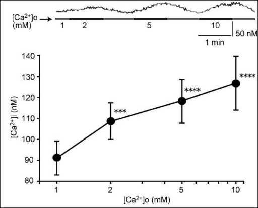 Effects of the high extracellular Ca2+ concentration ([Ca2+]o) on the [Ca2+]i of gingival fibroblasts. Application of Ca2+ (2–10 mM) in the perfusion buffer concentration dependently elevated the [Ca2+]i. The upper trace shows a time course of the [Ca2+]i. Data are mean ± SEM, N = 20. ***P < 0.005, ****P < 0.001 compare to corresponding pretreated values