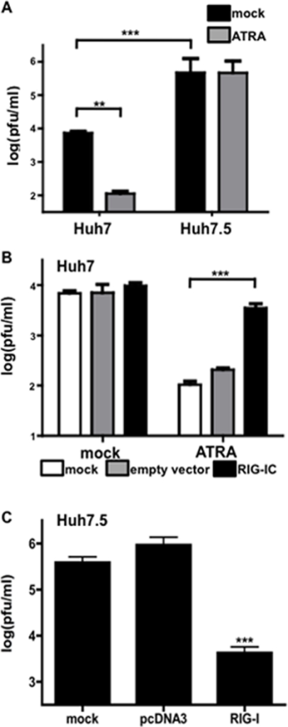RIG-I necessary for inhibition of MeV by ATRA.(A) Huh7 and Huh7.5 cells were infected MeV at an MOI of 0.01 and treated with 1 µM ATRA or DMSO. Whole cell lysates were harvested after 48 hours and viral titers were measured by plaque assay. (B) Huh7 cells were infected with MeV at an MOI of 0.01 and treated with 1 µM ATRA or DMSO and transfected with the control plasmid or RIG-I dominant negative (RIG-IC) expression construct. Whole cell lysates were harvested after 48 hours and viral titers were measured by plaque assay. (C) Huh7.5 cells were transfected with the control plasmid or RIG-I expression construct and infected with MeV at an MOI of 0.01. Whole cell lysates were harvested after 48hr and viral titers were measured by plaque assay. Data represent two experiments performed in triplicate (N = 2). **p<0.01, ***p<0.001.