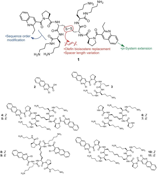 Hit compound 1 identified via RBDCC and molecules (2–11) synthesized in this work.